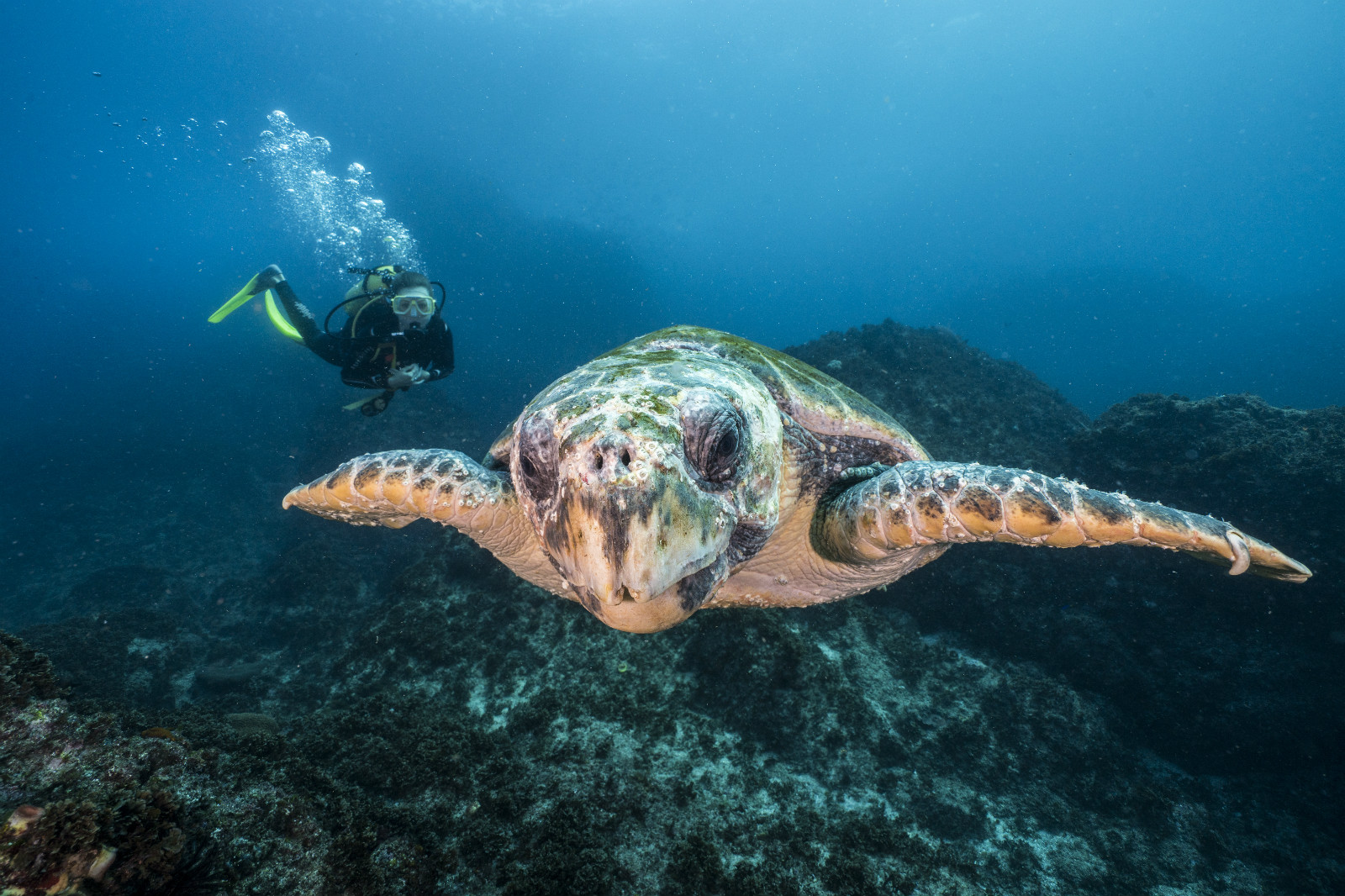 ​FIVE ICONIC DIVE AND SNORKELLING SITES ON THE NSW COASTLINE cover image