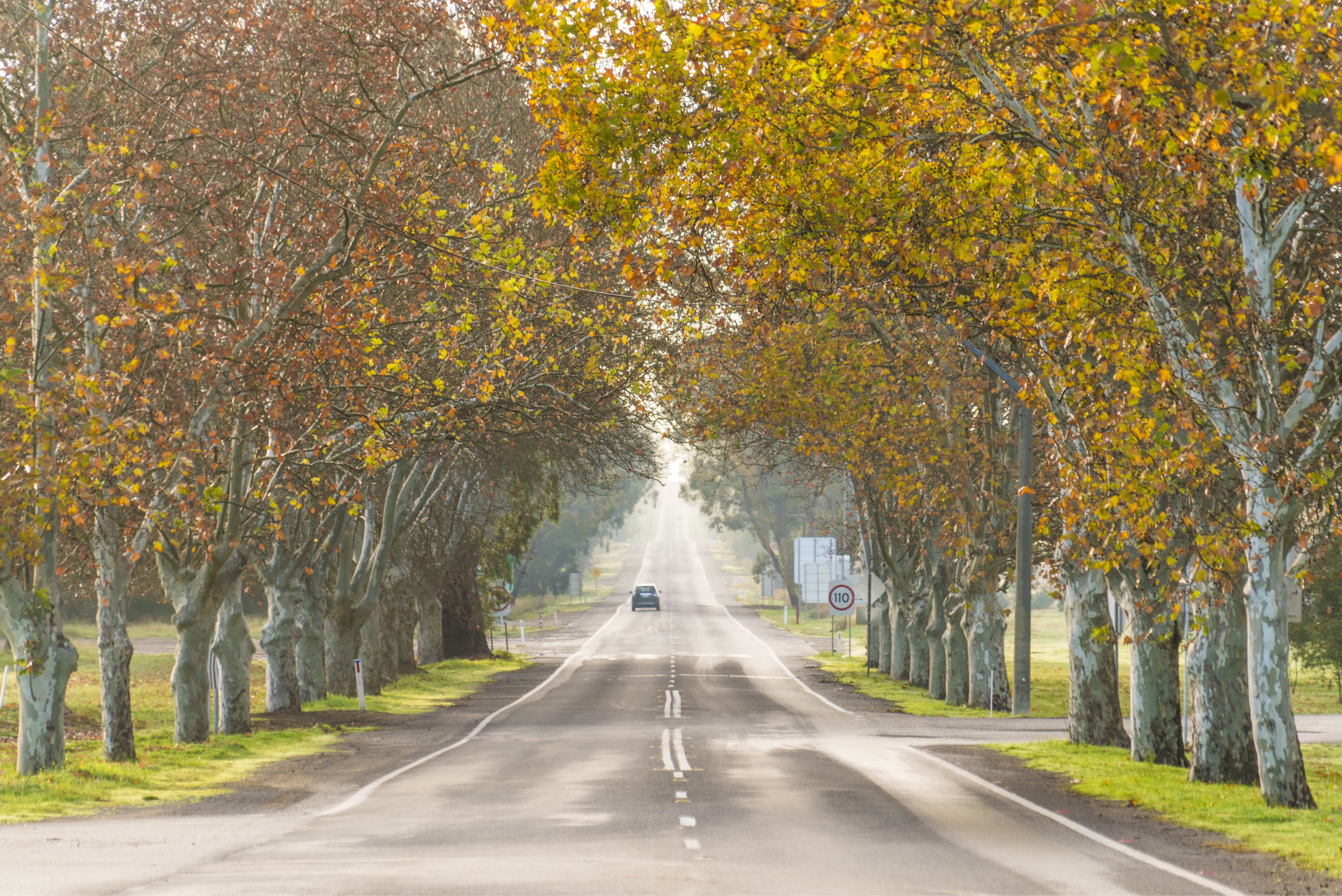 BEST PLACES TO SEE AUTUMN LEAVES IN SYDNEY cover image