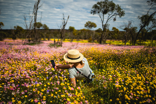 THE BEST OF WESTERN AUSTRALIA'S WILDFLOWER HOTSPOTS  cover image