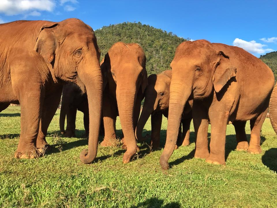 GLOBAL COMMUNITY IS THE ONLY HOPE FOR 1,000 ELEPHANTS Article cover photo